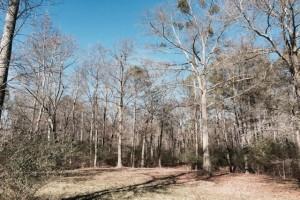 Lakeview Drive, Nicholson, GA 30565 _9